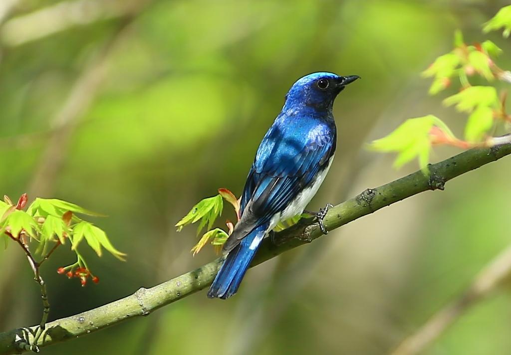 『リズと青い鳥』公式サイト - liz-bluebird.com
